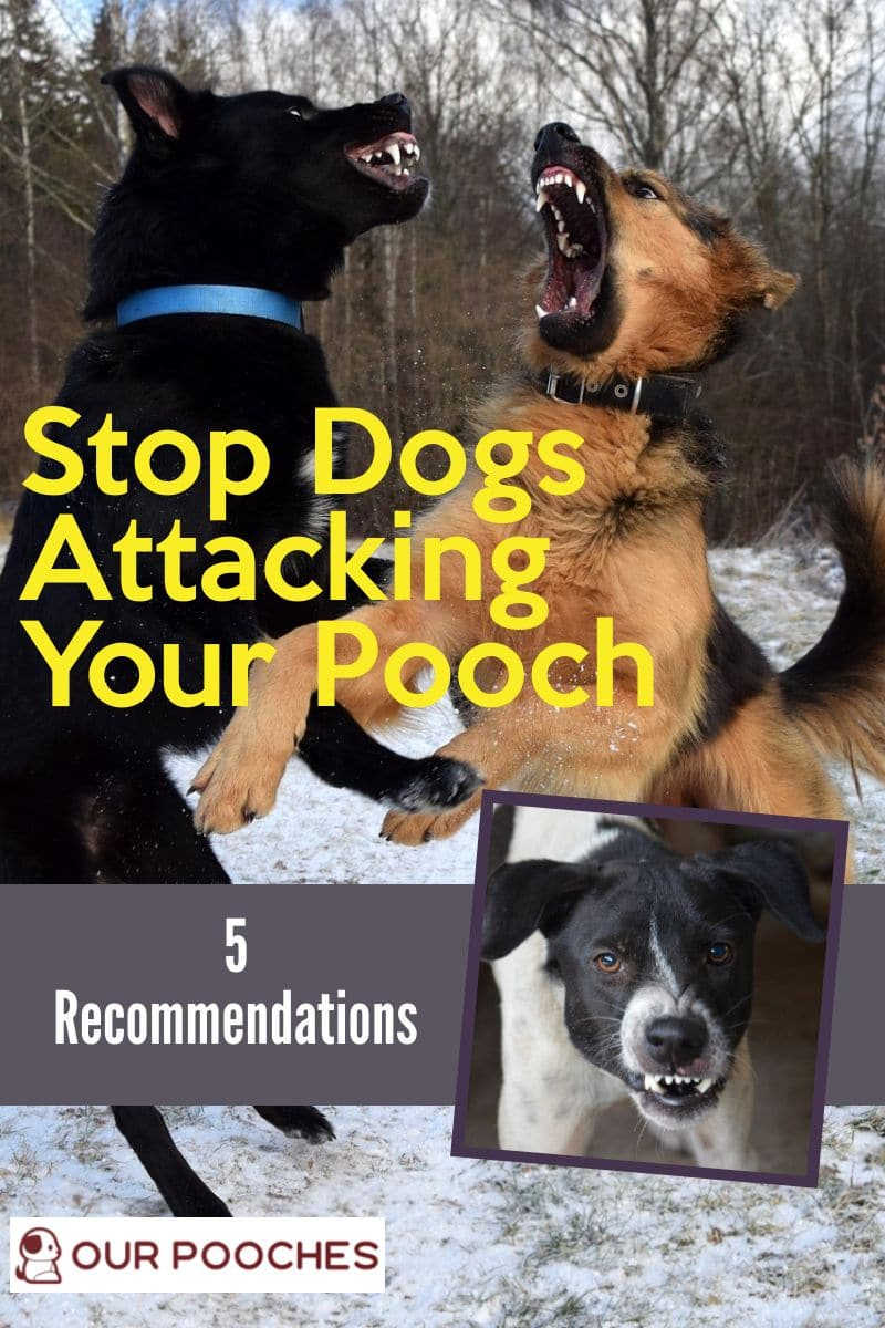 5 Recommendations to stop other dogs from attacking yours