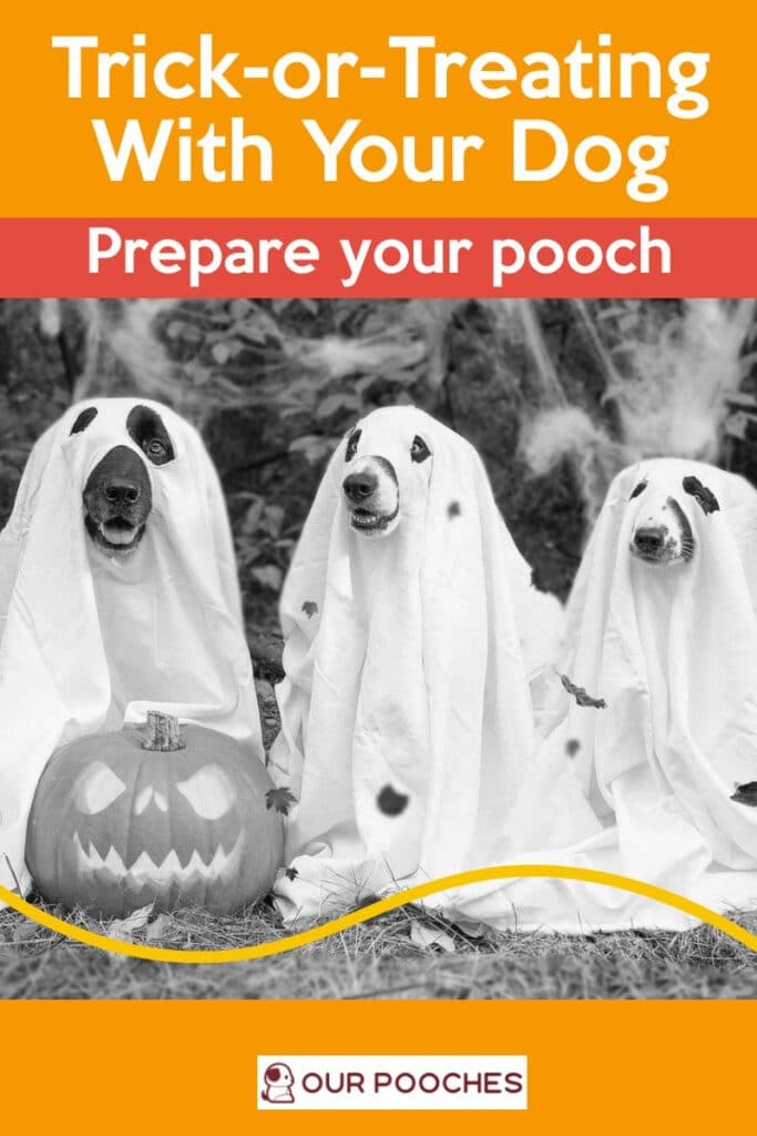 Halloween Trick-or-Treating, prepare your pooch
