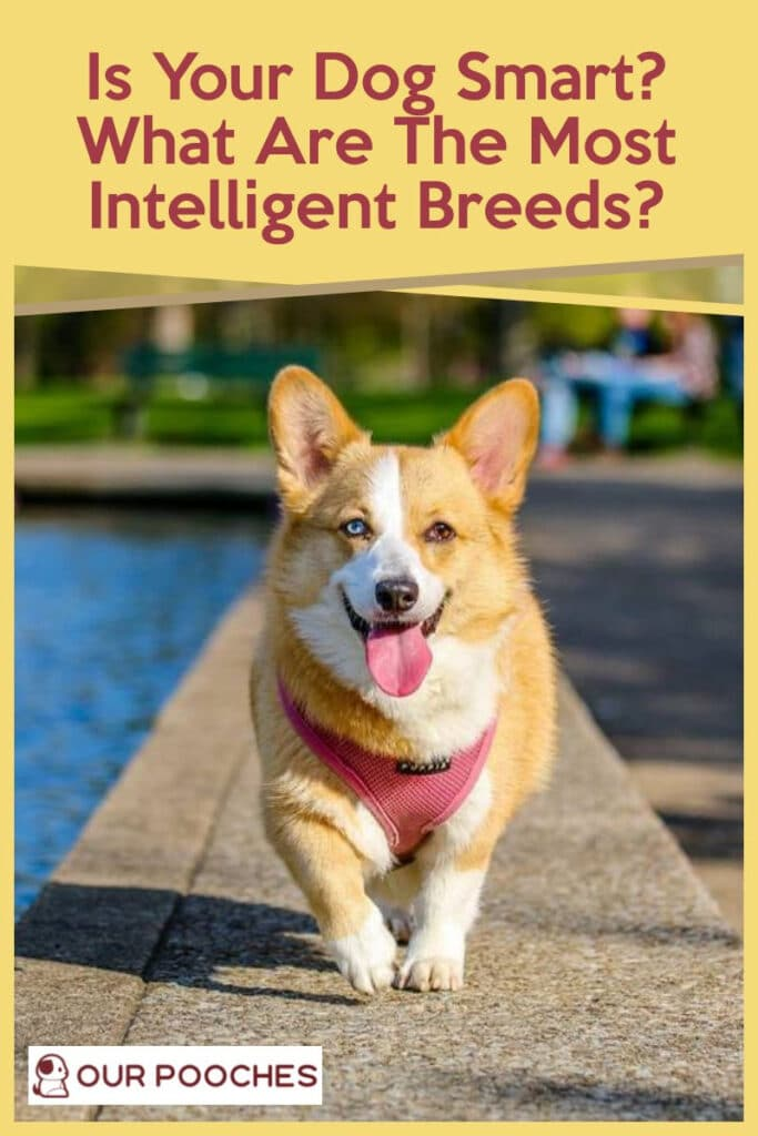 Is Your Dog Smart