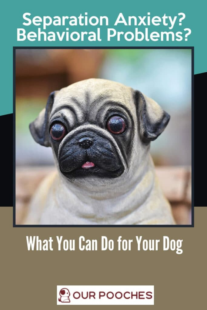 Separation Anxiety Behavioral Problems What you can do for your dog
