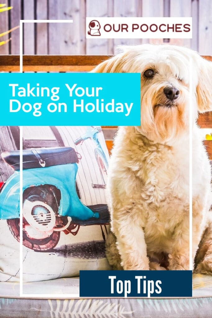 Taking your dog on holiday - top tips