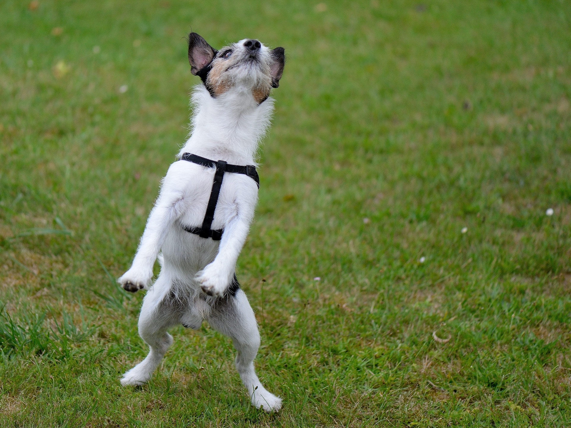 How to Tame Your Jumper Dog: 5 Top Tips