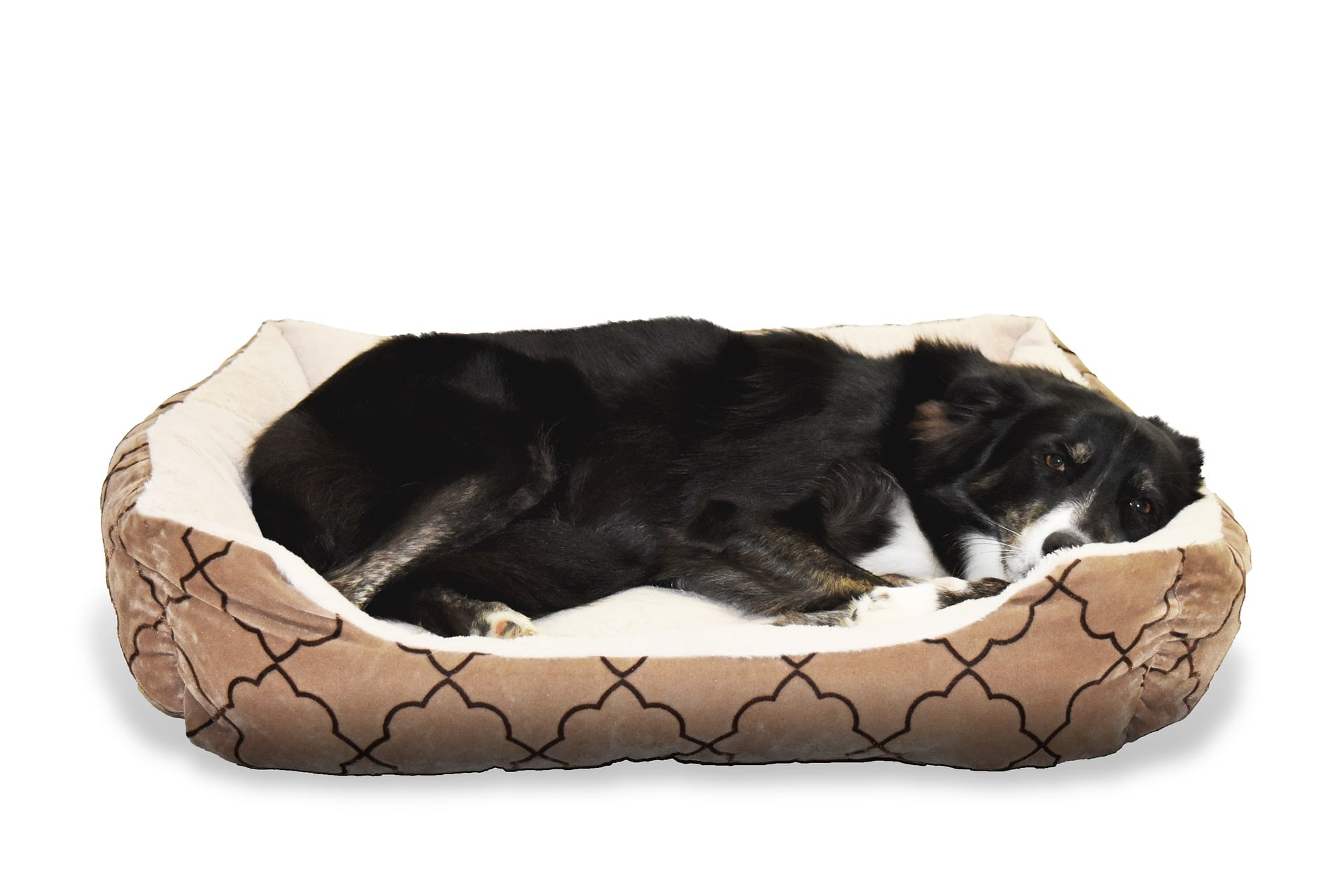 Your Dog And His Bed: What Type Is Best