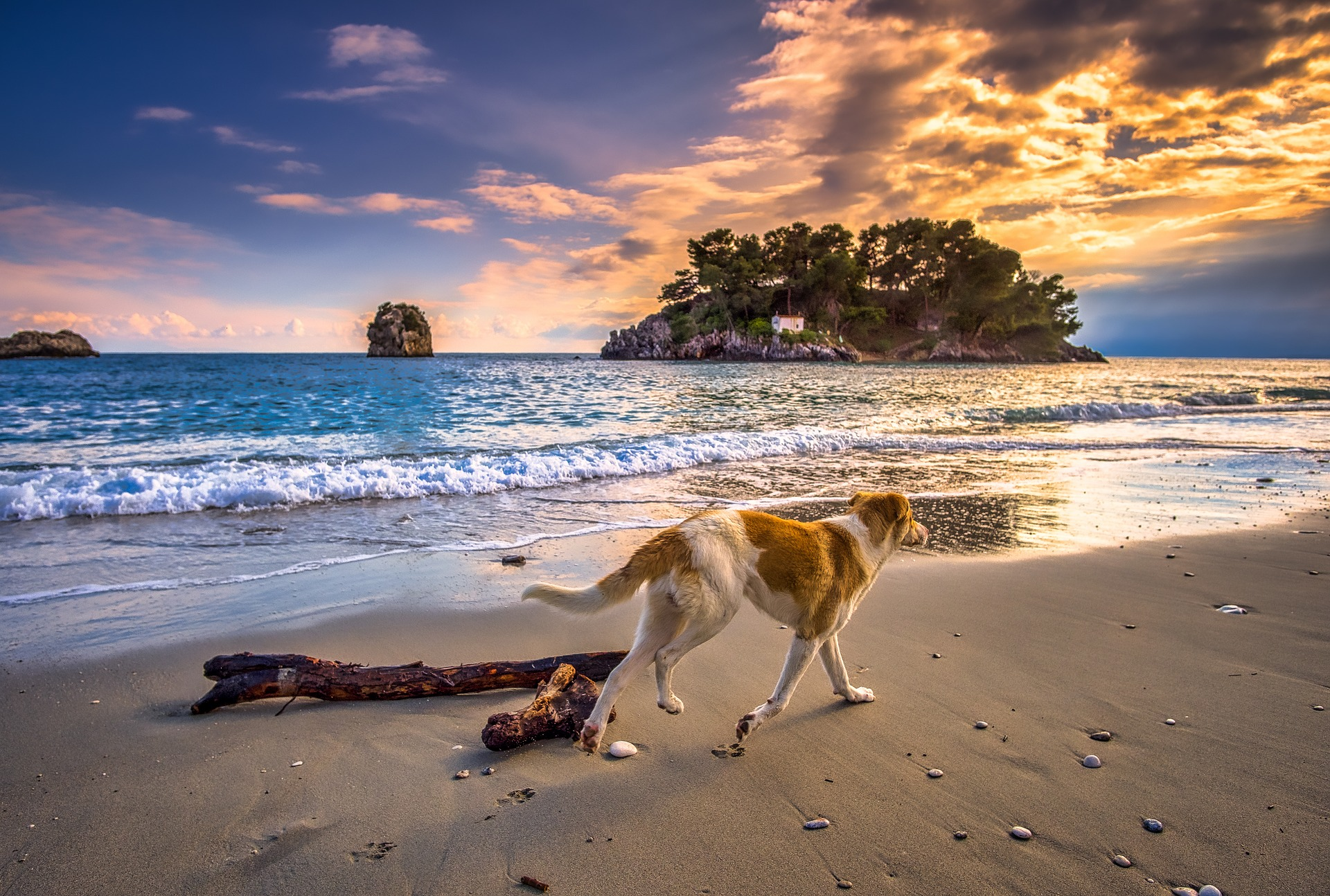Dog Safety At The Beach: Know The Dangers