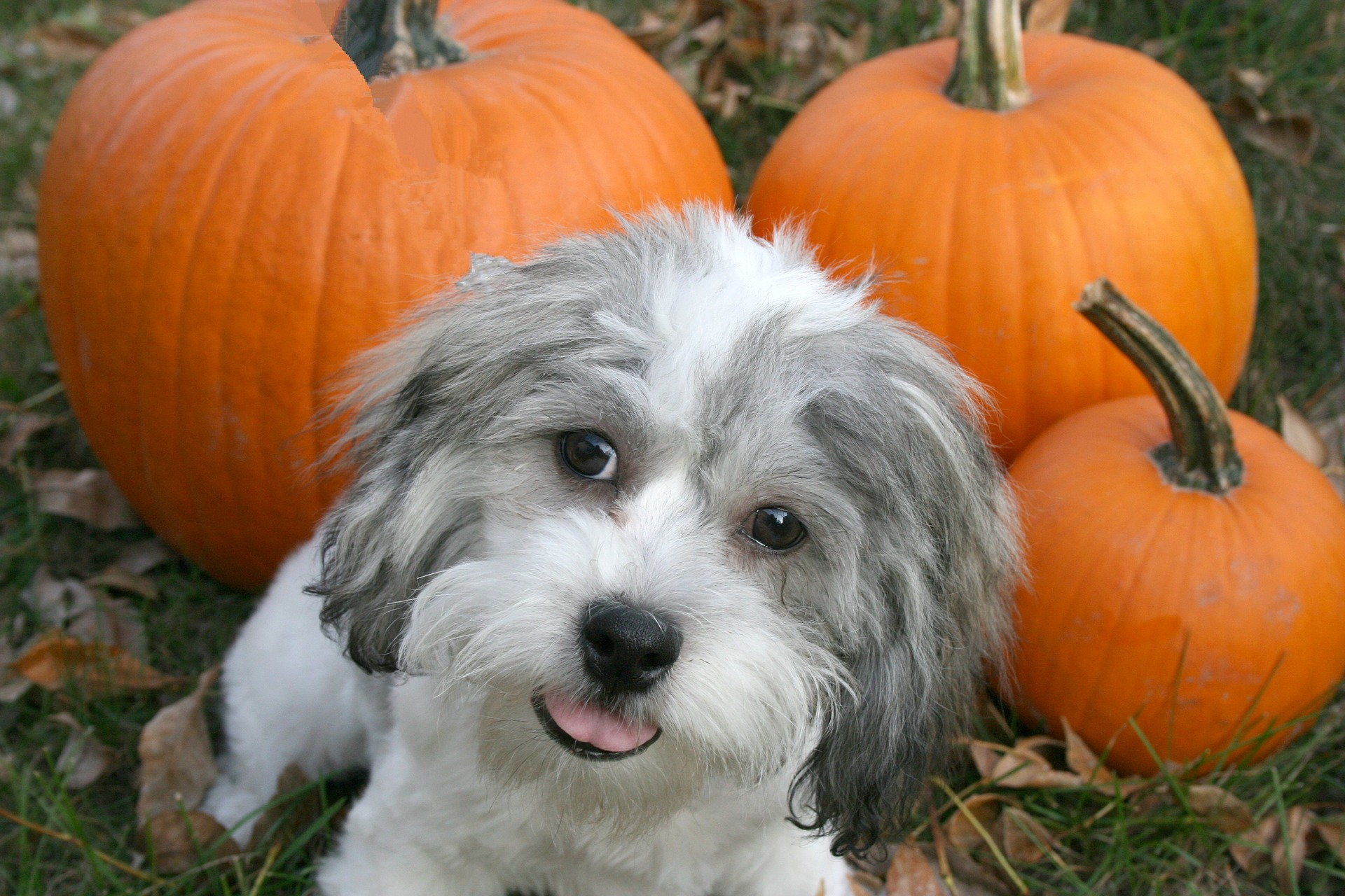 Get Ready For Halloween Trick-or-Treating With Your Dog!