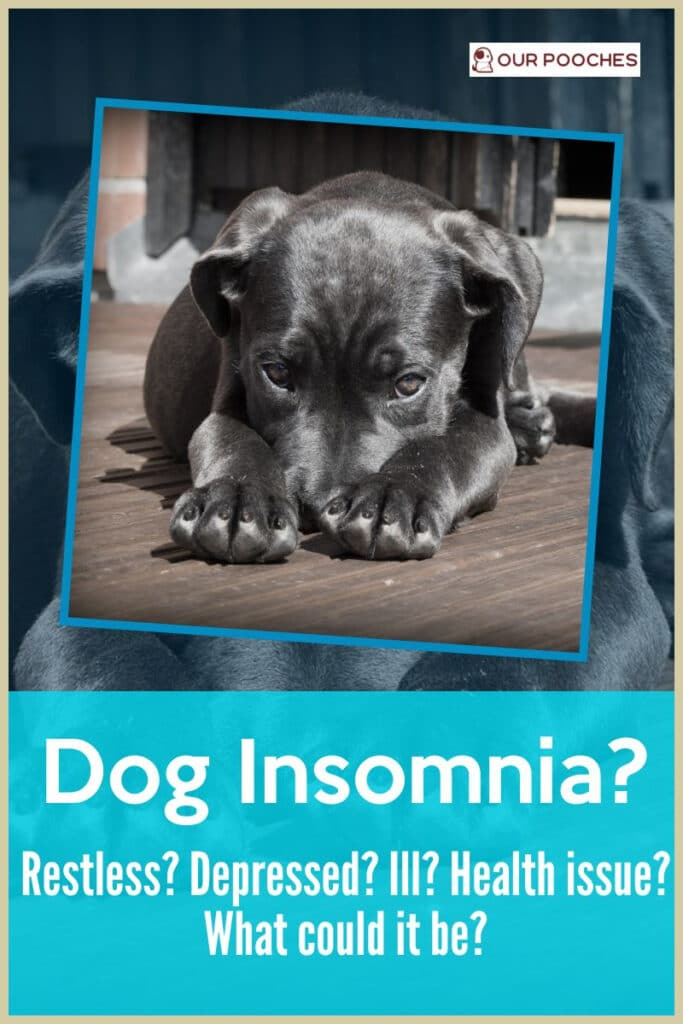 What causes dog insomnia