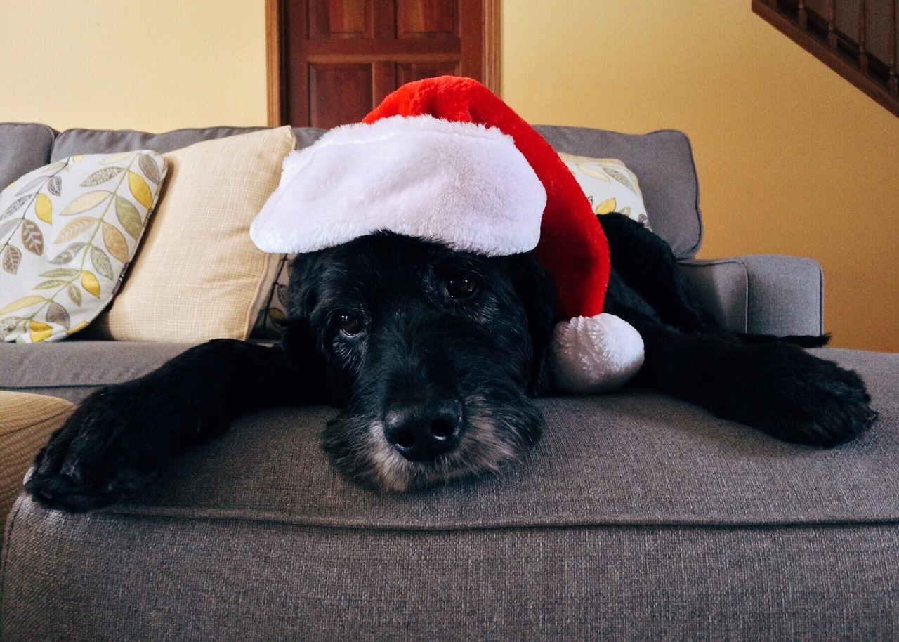 Include Your Dog In Holiday Cards! Here Are Some Tips!