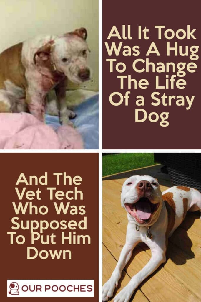 A Hug To change the life of a stray dog