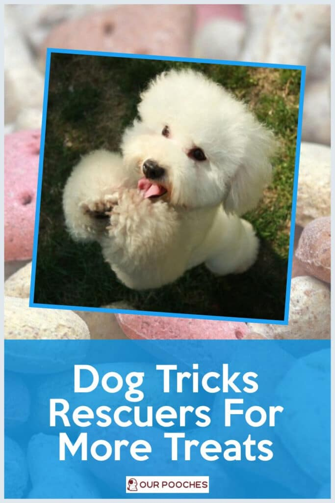 Dog Tricks Rescuers For More Treats