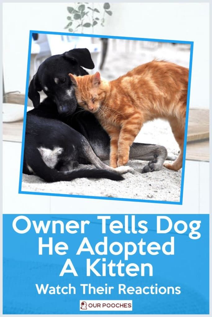 Owner Tells Dog He Adopted A Kitten