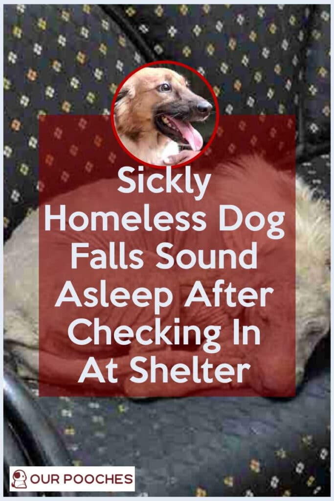 Sickly Homeless Dog Falls Sound Asleep After Checking In At Shelter