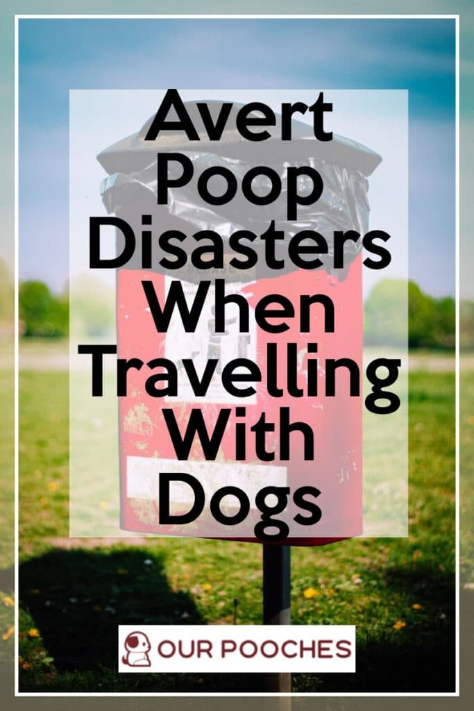 Avert Poop Disasters When Travelling With Dogs