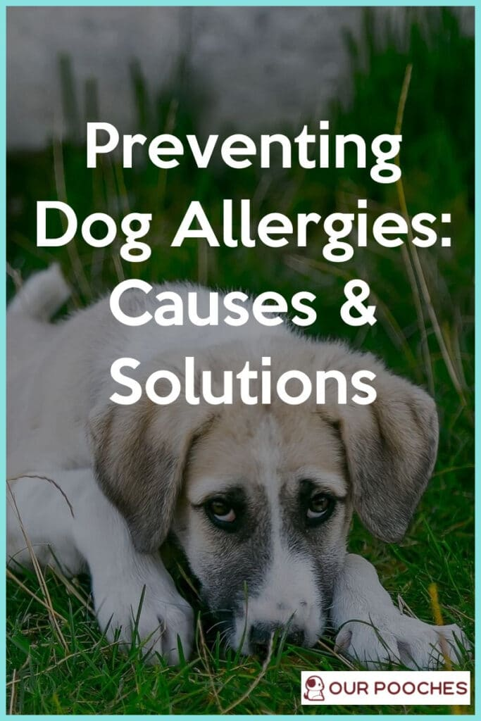 Preventing Dog Allergies Causes and Solutions