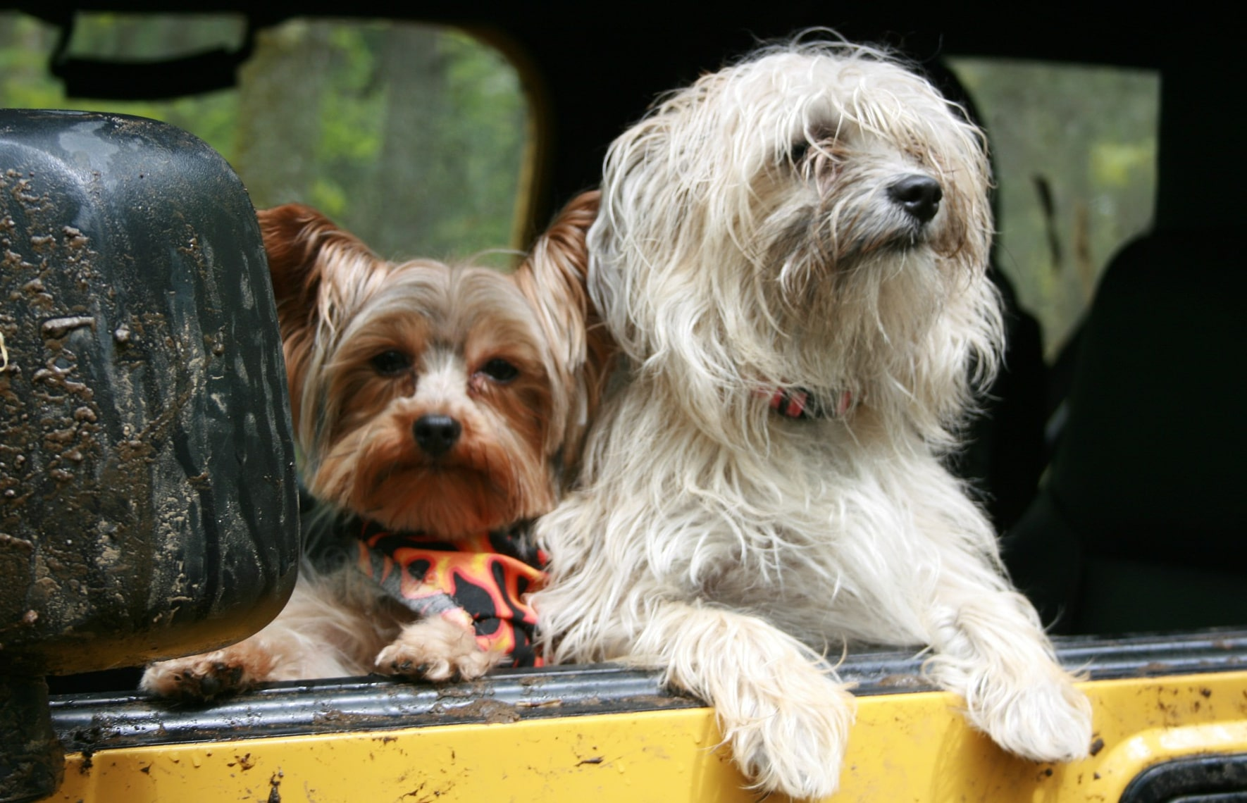 Preventing Poop Disaster When Travelling With Your Dog