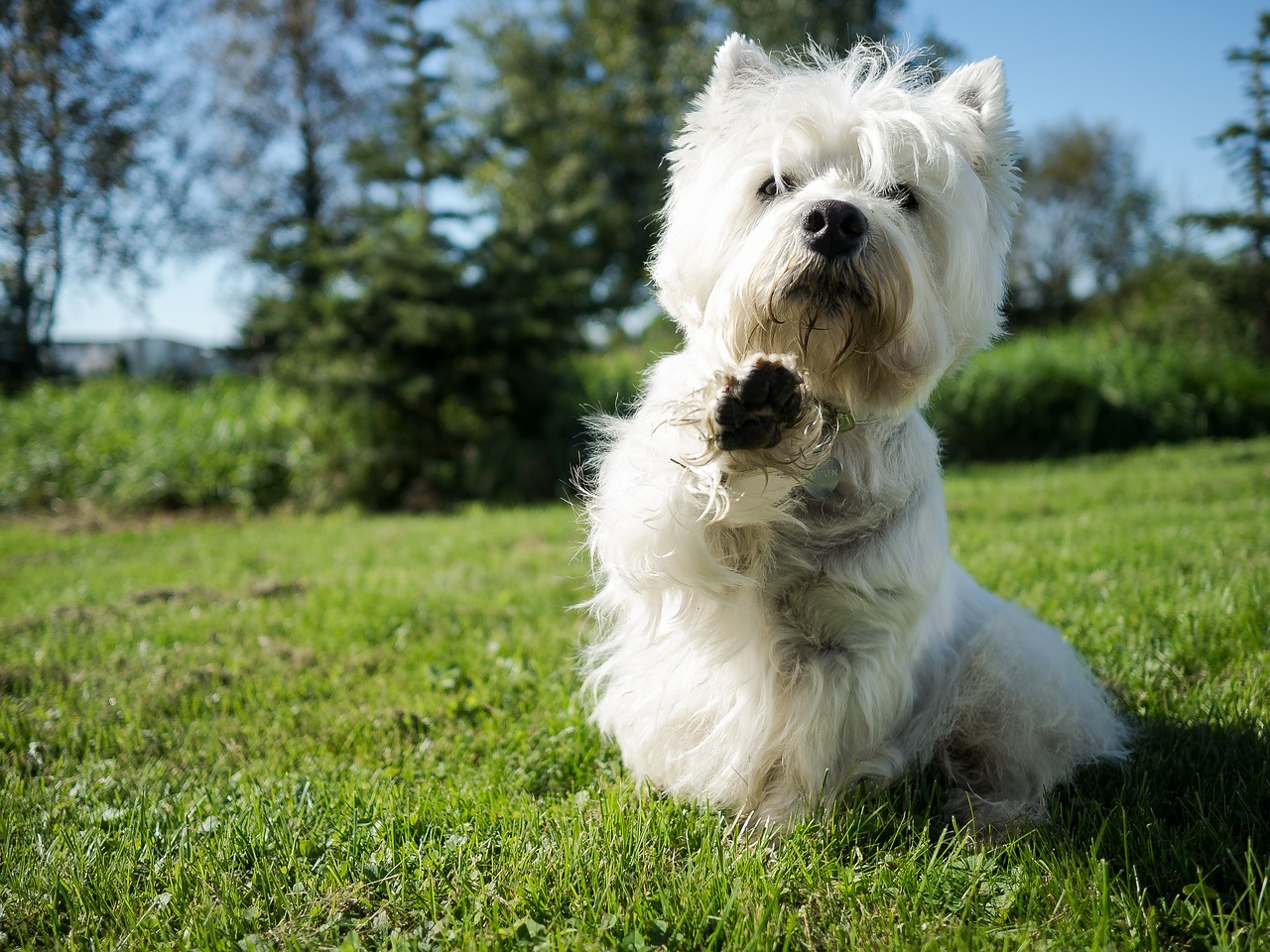 Proper Etiquette At The Dog Park: 5 Great Tips
