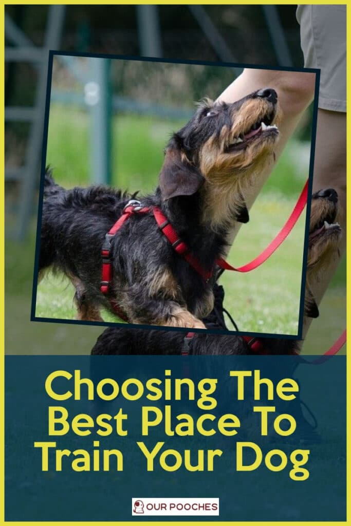 Choosing The Best Place To Train Your Dog