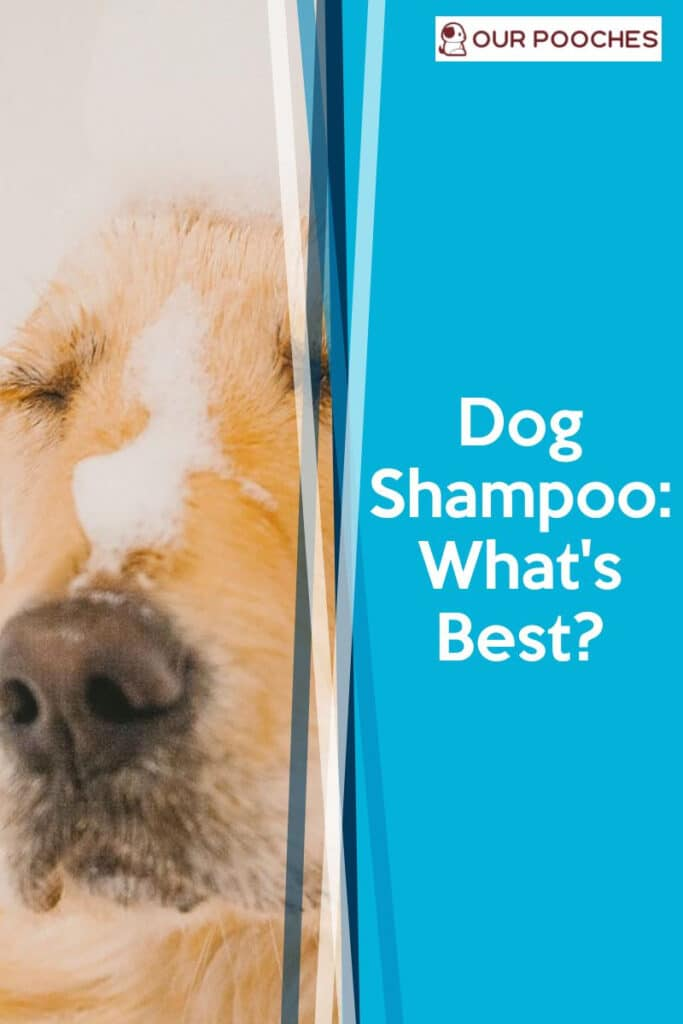 Dog shampoo - what's the best