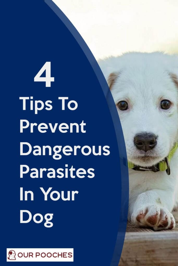 Tips To Prevent Dangerous Parasites In Your Dog