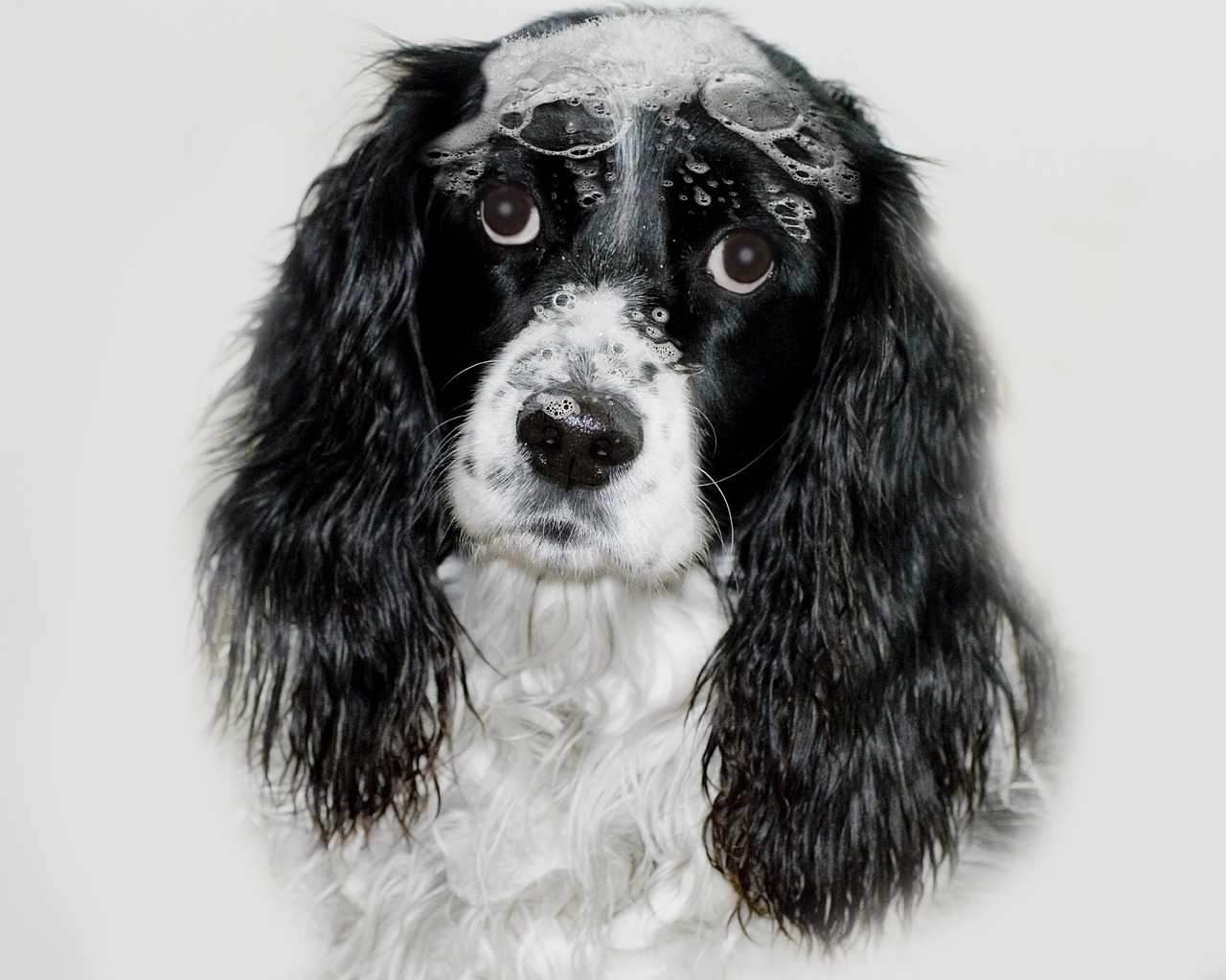 Choosing The Perfect Shampoo For Your Dog
