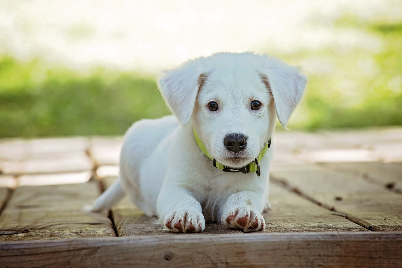 How To Protect Your Dog From Dangerous Parasites