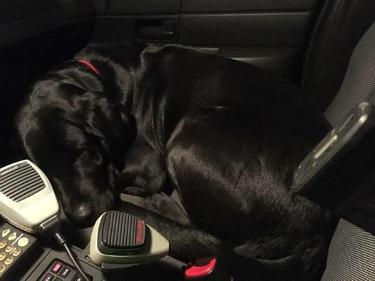 Police Officer Finds Dog Inside His Car – Takes Him For A Ride Home