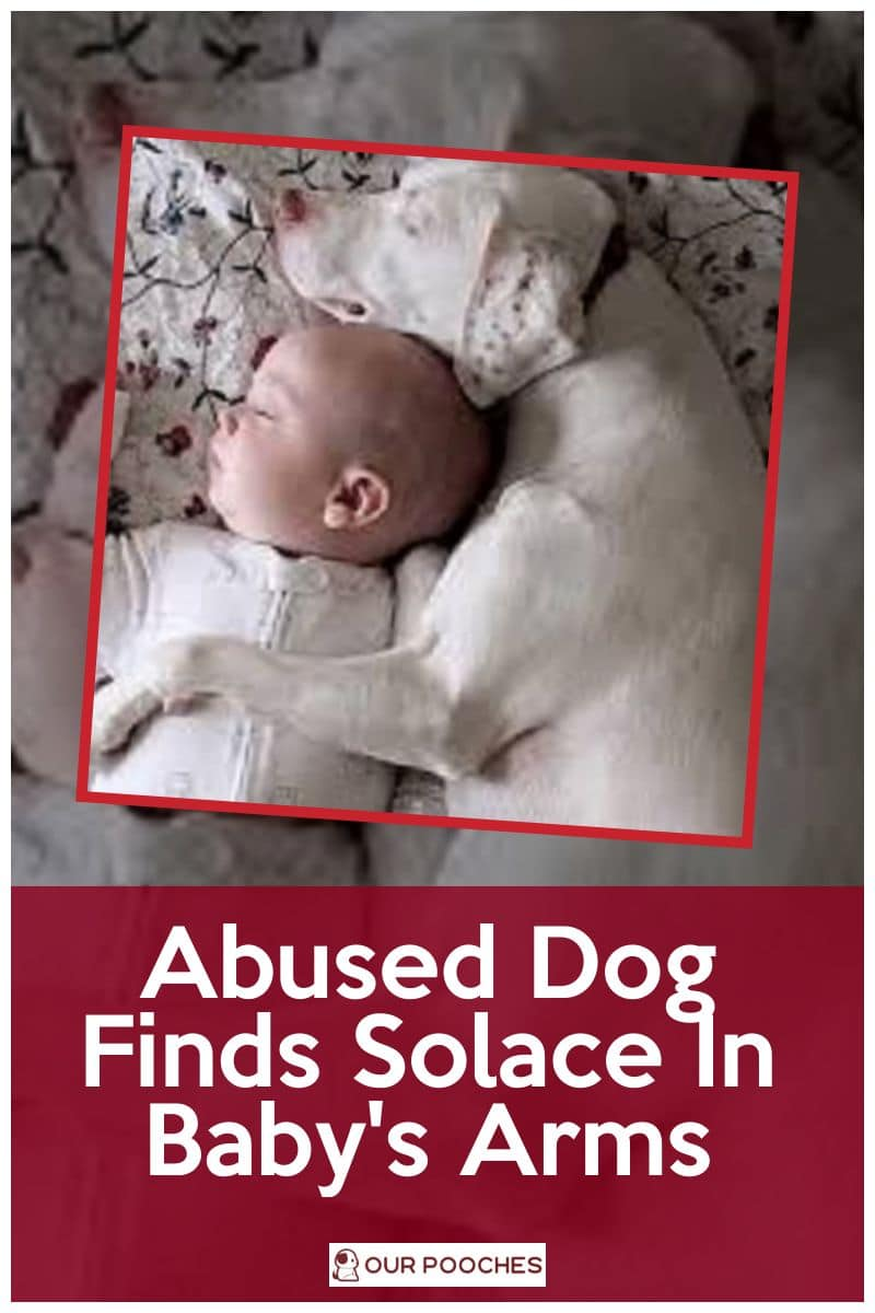 Abused Dog Finds Solace In Baby Brother's Arms
