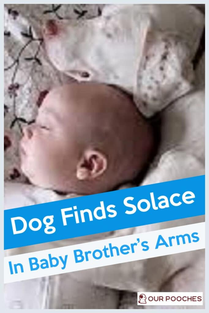 Dog Finds Solace In Baby Brother's Arms