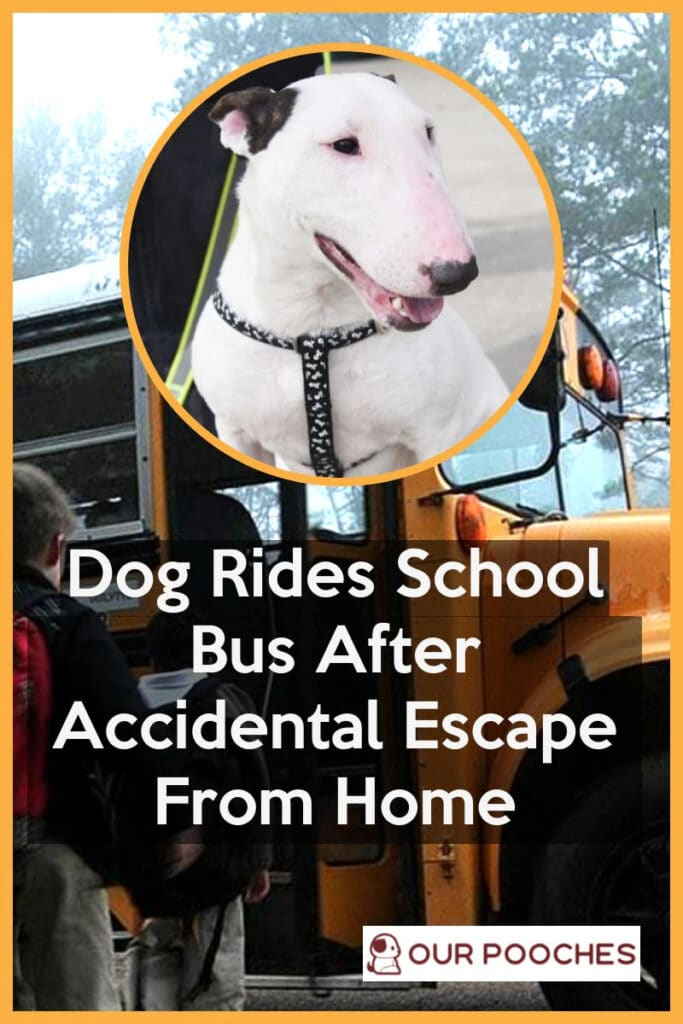 Dog Rides School Bus After Accidental Escape