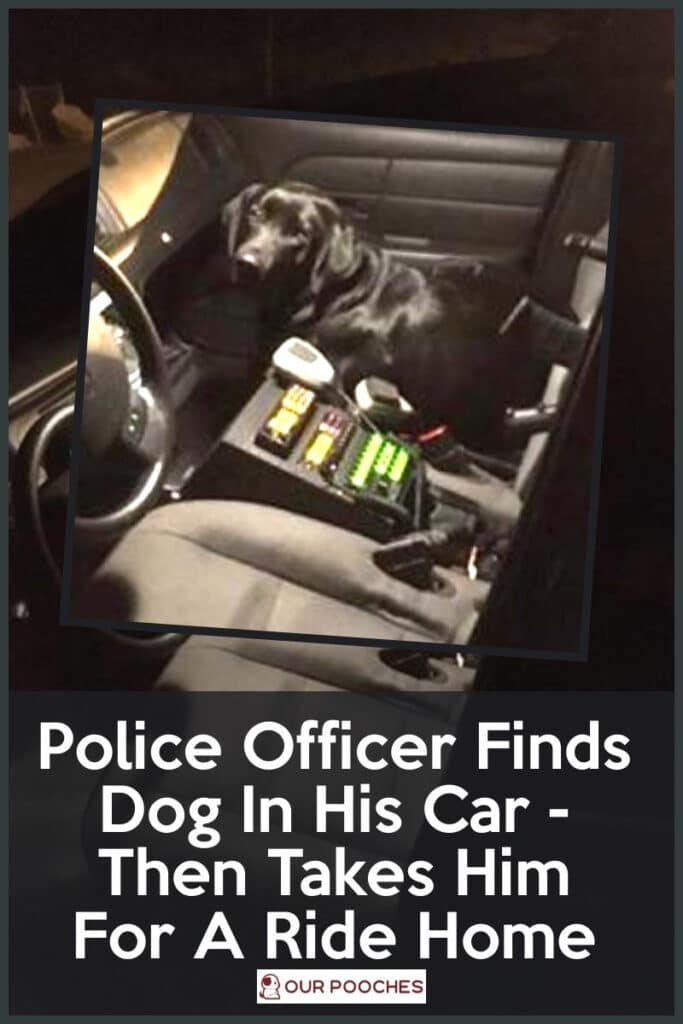 Officer finds dog in his car then takes it home