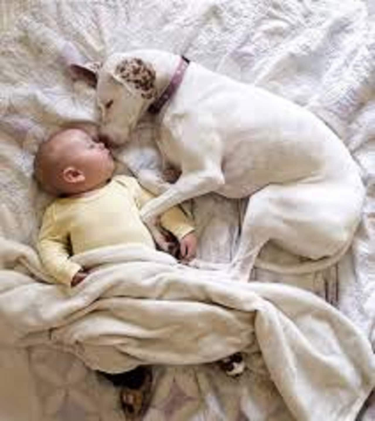 dog and baby sleeping side by side