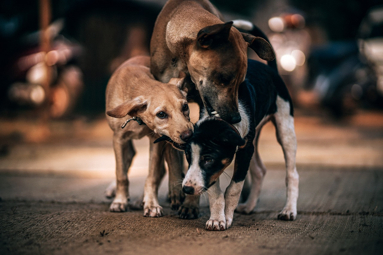 Stray Dogs Ask Teens To Help Their Friend