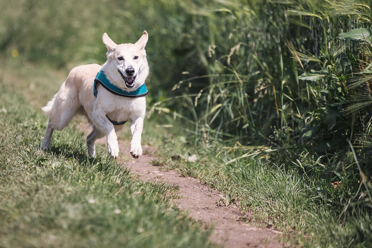 Poor Dog Hit by Car, Couldn't Walk — Now He Runs!