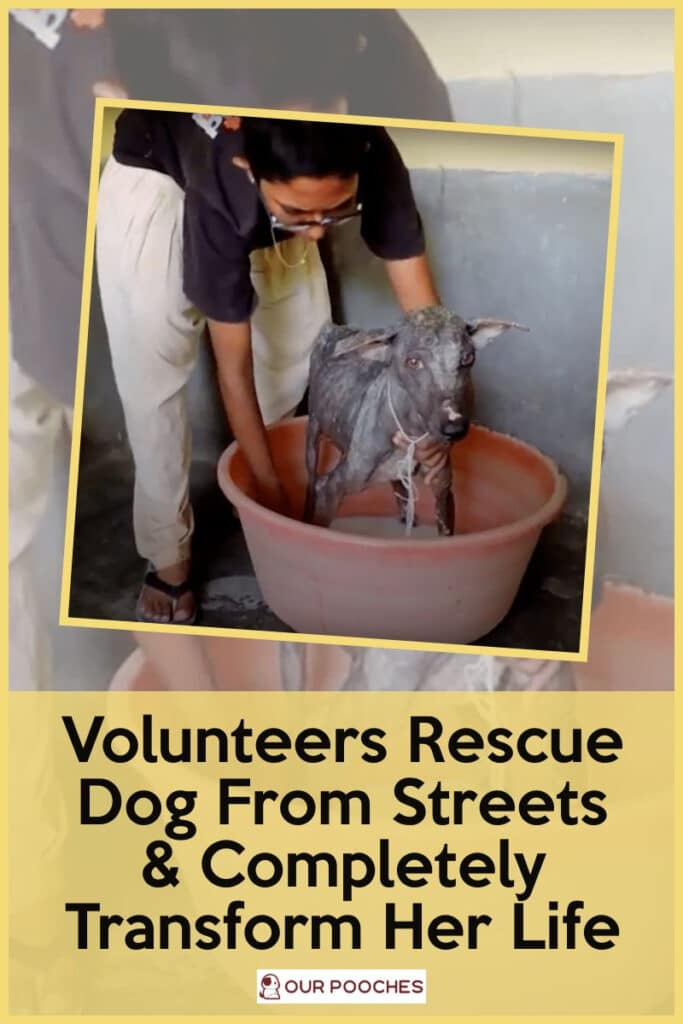 Volunteers Rescue A Dog From The Streets
