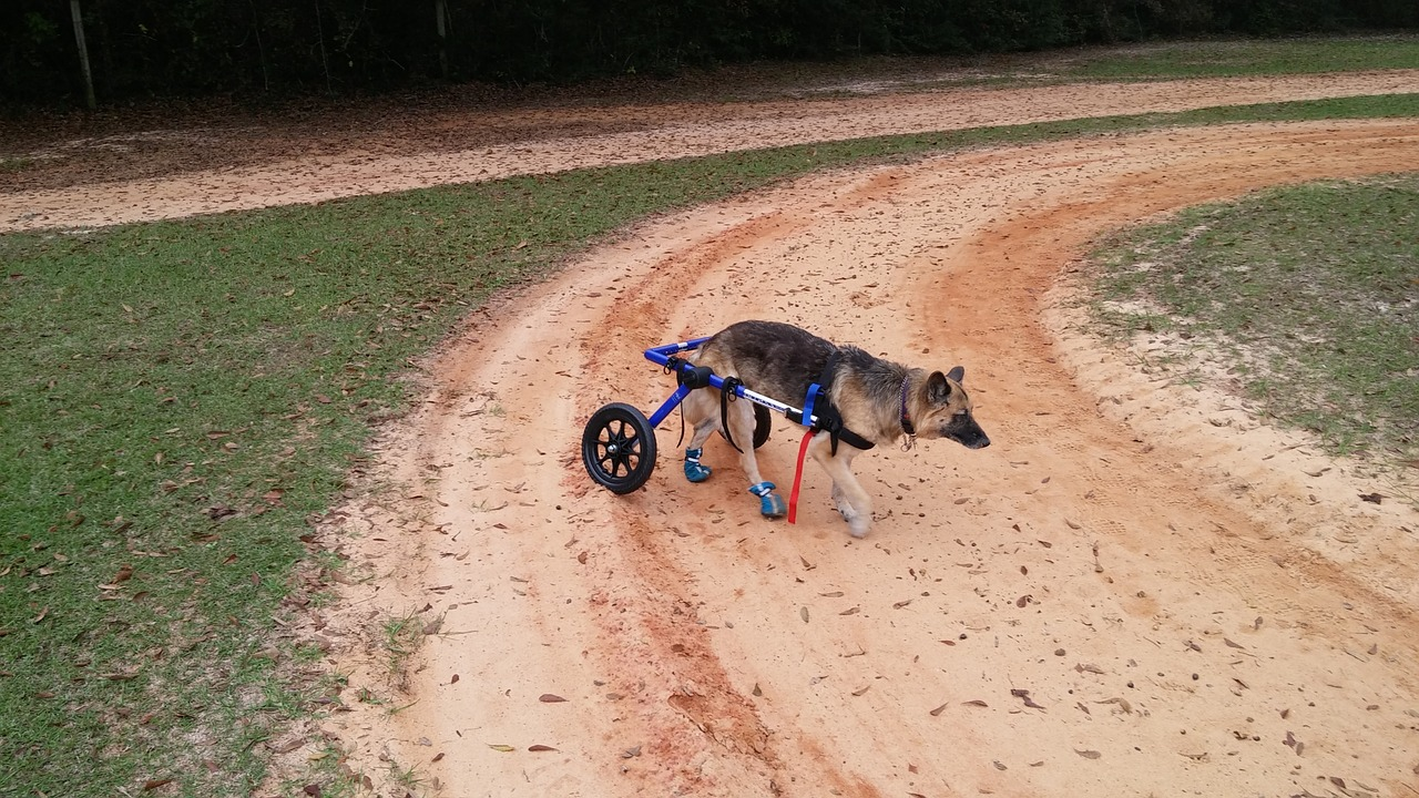 Couple Reinvents Old Carts To Help Dogs With Mobility Issues Freely Move Again