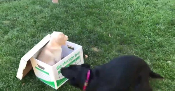 Black Lab Had The Most Epic Reaction