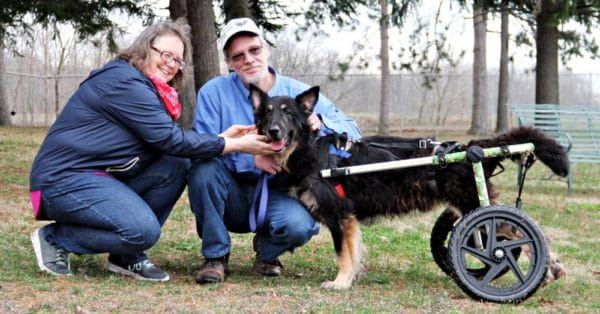 Old Carts To Help Dogs With Mobility Issues