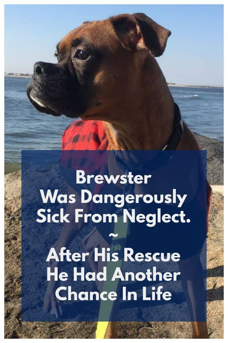 Brewster was saved from neglect