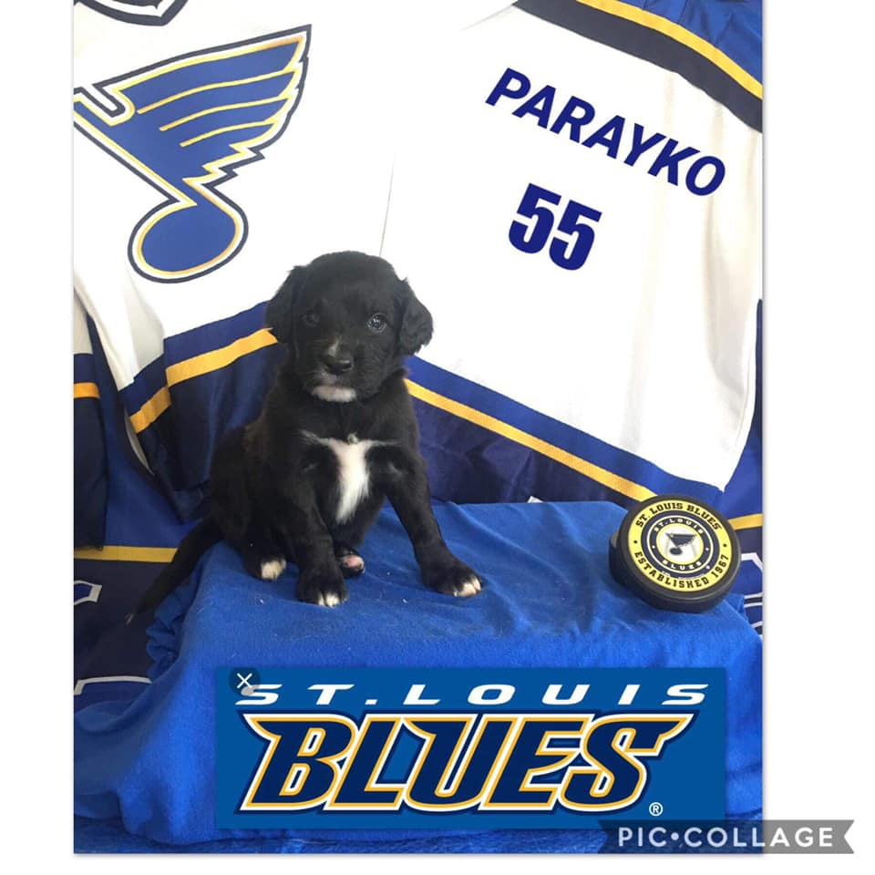 Parayko is Named After The Blues