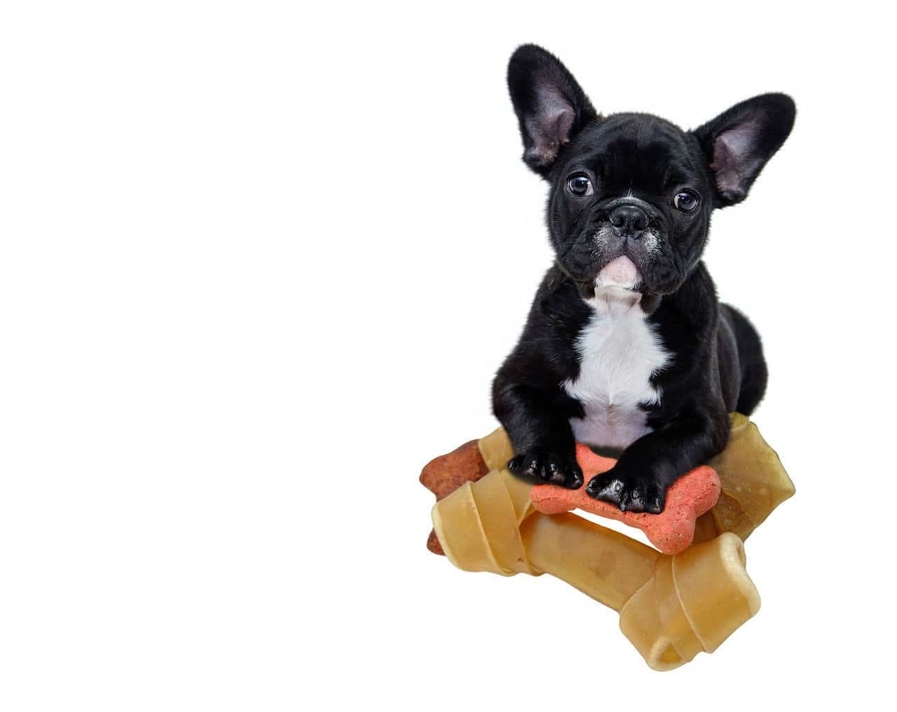 Newborn French Bulldog Gets Her Own Photo Shoot