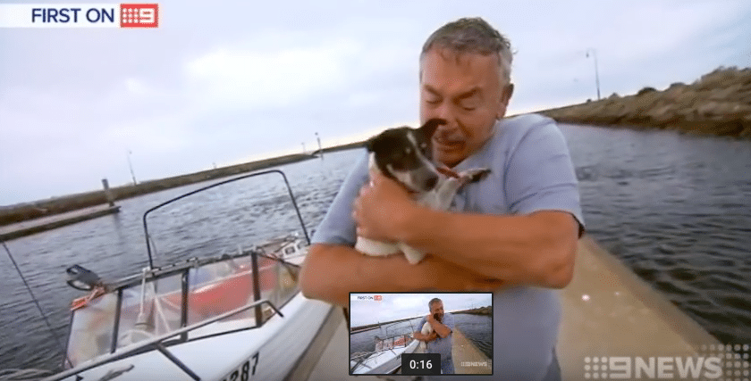 Terrier Rescued At Sea