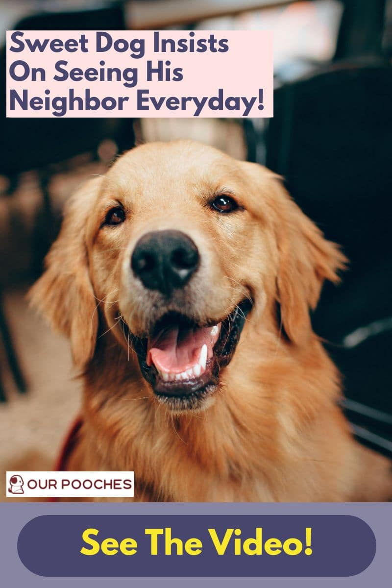 Sweet dog sees neighbour daily