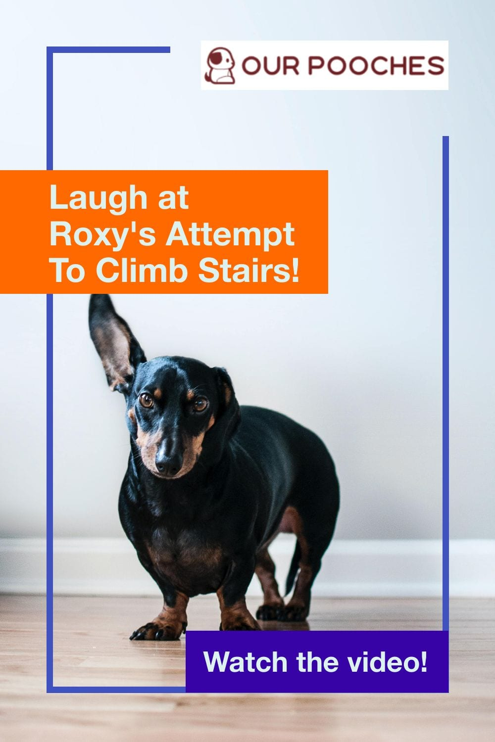 Laugh at Roxy's Attempt To Climb Stairs!