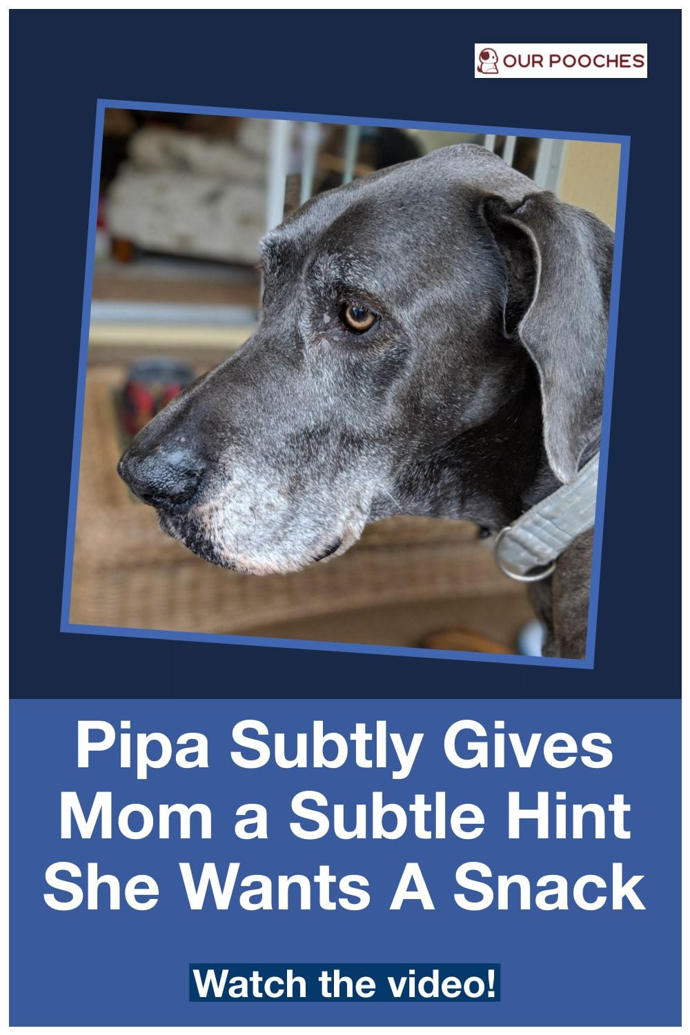 Pipa Subtly Gives Mom a Subtle Hint She Wants A Snack
