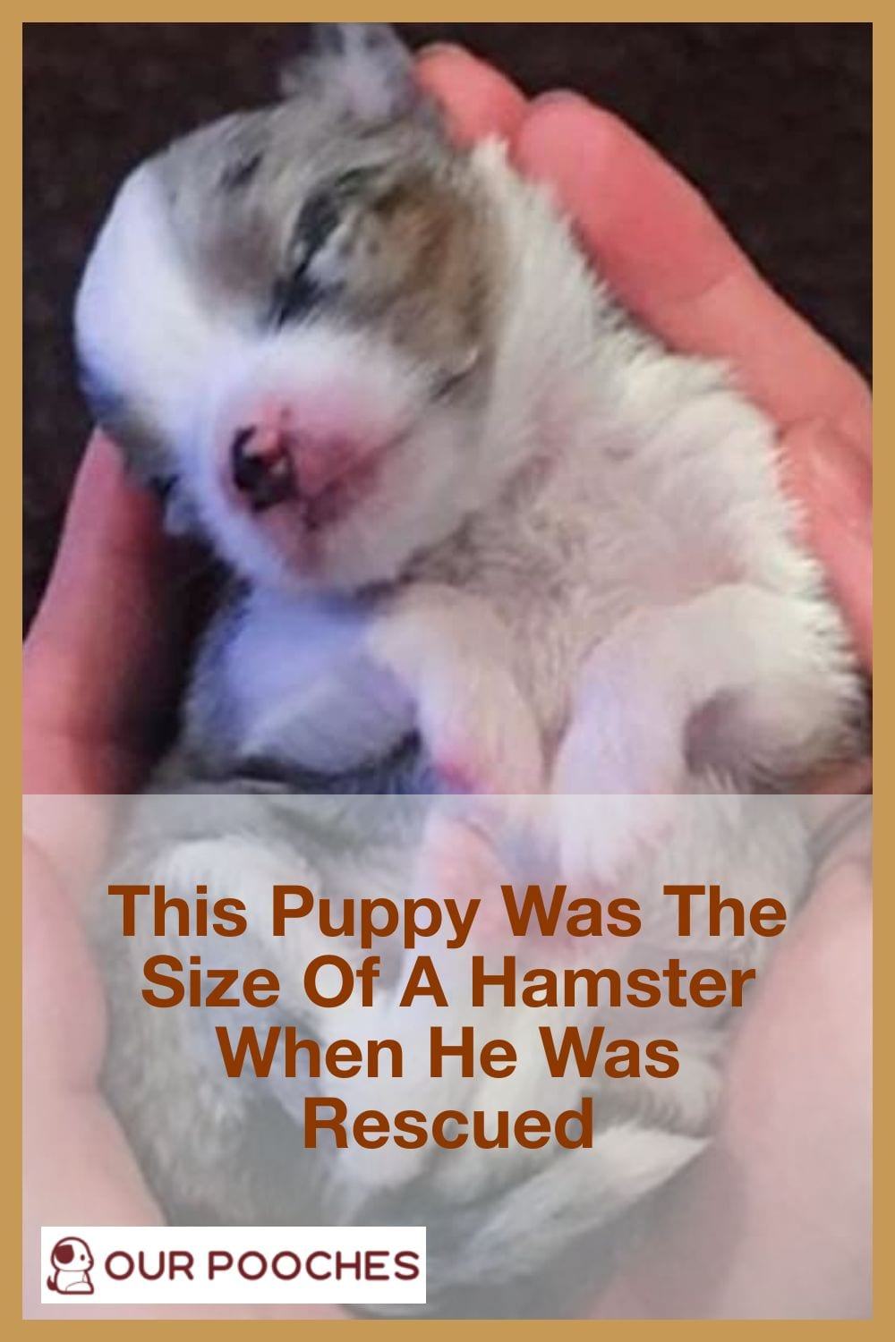 Pup was size of hamster when rescued