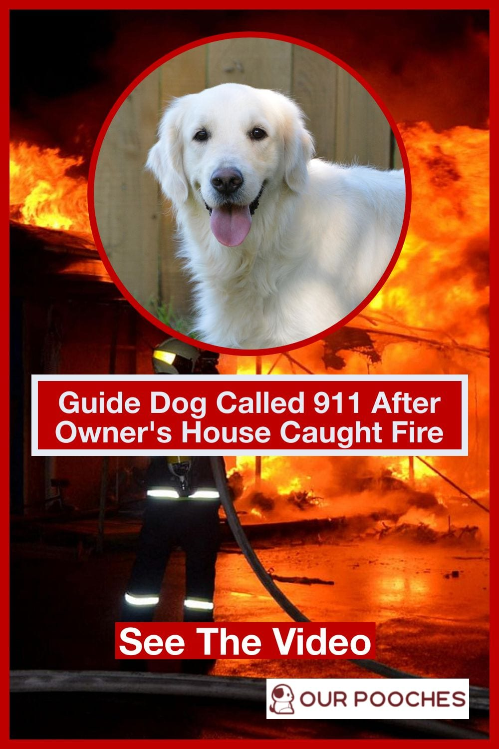 Guide Dog Calls 911 To Report House Fire