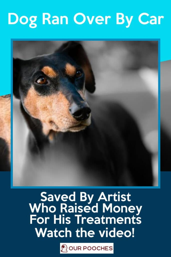 Car hit dog, artist raised money for treatment
