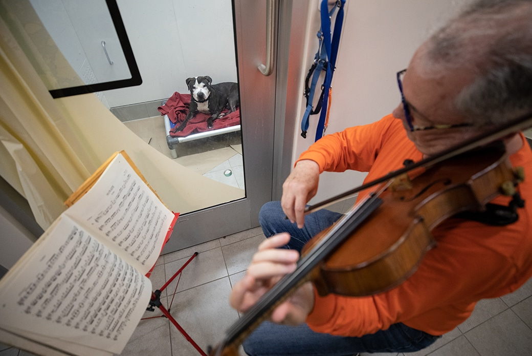 Professional Violinist Plays Therapeutic Classical Songs For Shelter Dogs