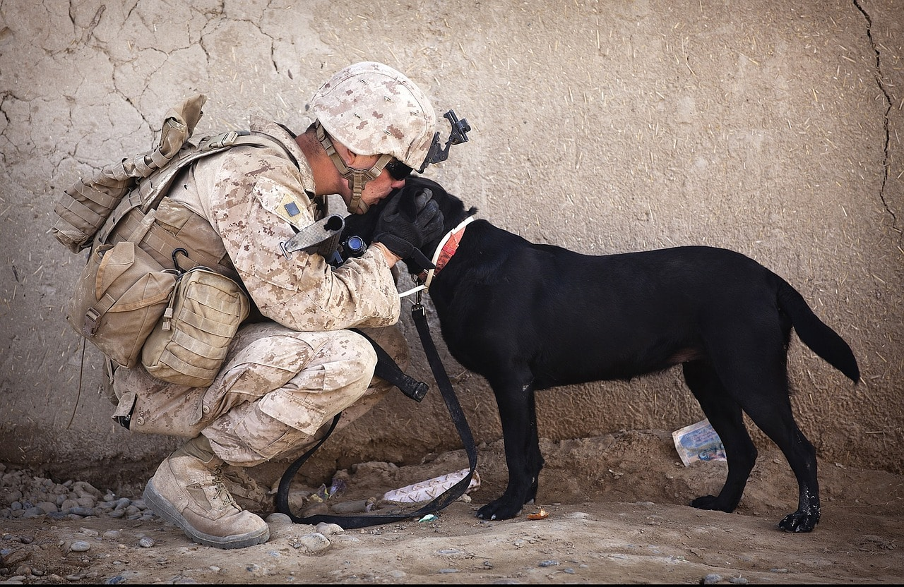 Soldier Gets Reunited With Puppy Who Helped Him Through Deployment