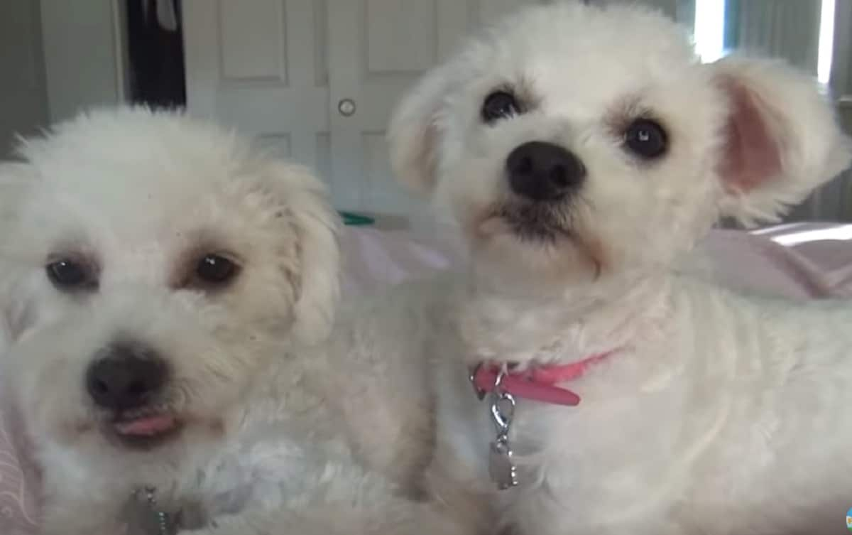 Sibling Dogs Find Their Forever Home After Living In A Park