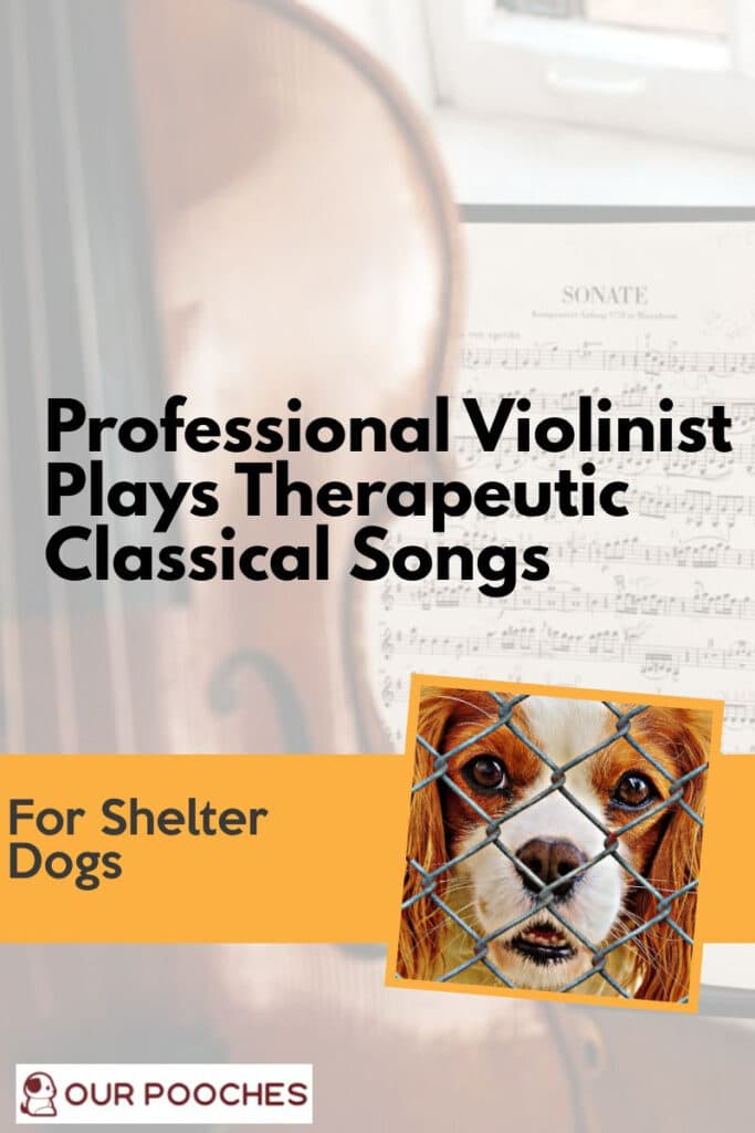 Violinist plays therapeutic classical songs for shelter dogs